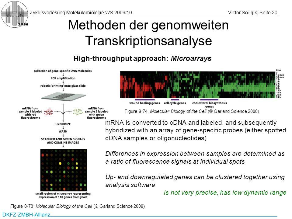 Zyklusvorlesung Molekularbiologie WS 2009/10Victor Sourjik, Seite 30 Methoden der genomweiten Transkriptionsanalyse High-throughput approach: Microarr