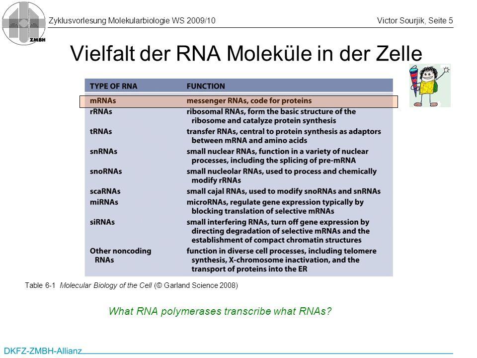 Zyklusvorlesung Molekularbiologie WS 2009/10Victor Sourjik, Seite 5 Vielfalt der RNA Moleküle in der Zelle Table 6-1 Molecular Biology of the Cell (©