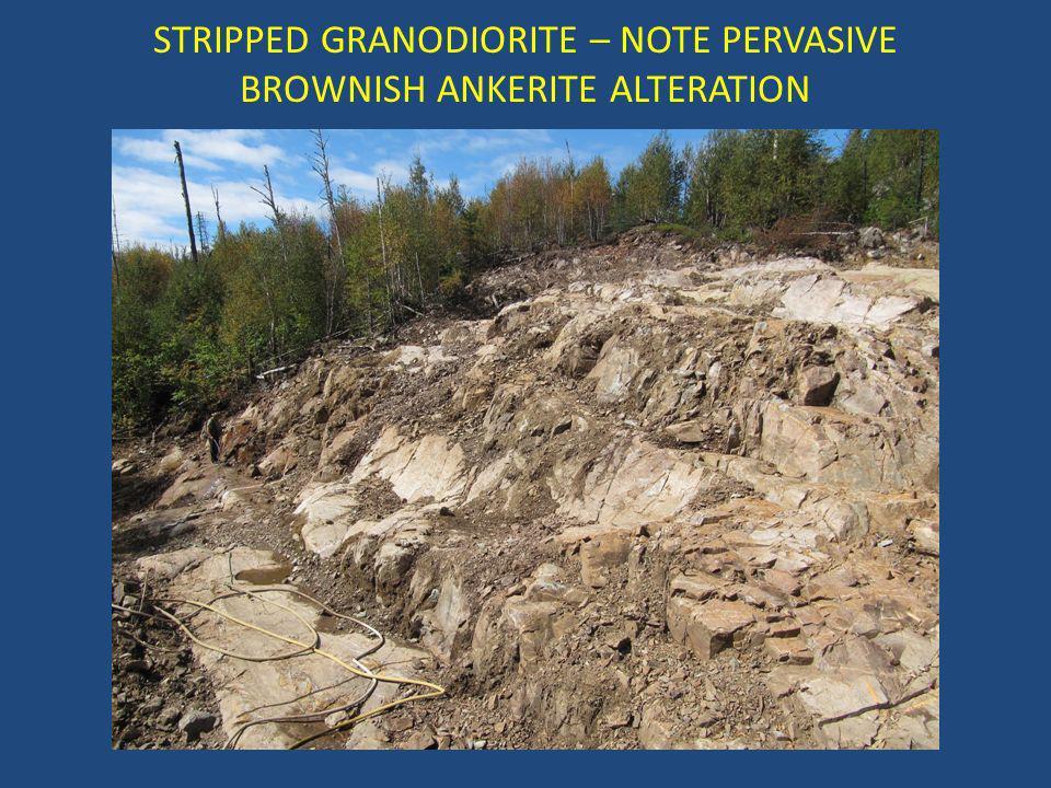 STRIPPED GRANODIORITE – NOTE PERVASIVE BROWNISH ANKERITE ALTERATION