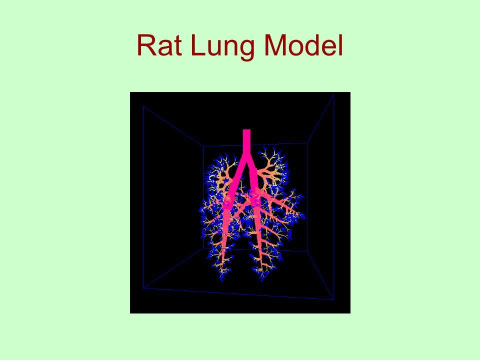 Rat Lung Model