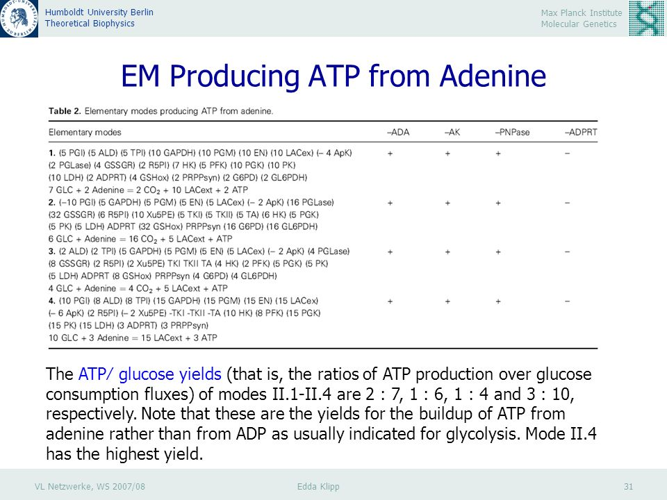 VL Netzwerke, WS 2007/08 Edda Klipp 31 Max Planck Institute Molecular Genetics Humboldt University Berlin Theoretical Biophysics EM Producing ATP from Adenine The ATP glucose yields (that is, the ratios of ATP production over glucose consumption fluxes) of modes II.1-II.4 are 2 : 7, 1 : 6, 1 : 4 and 3 : 10, respectively.