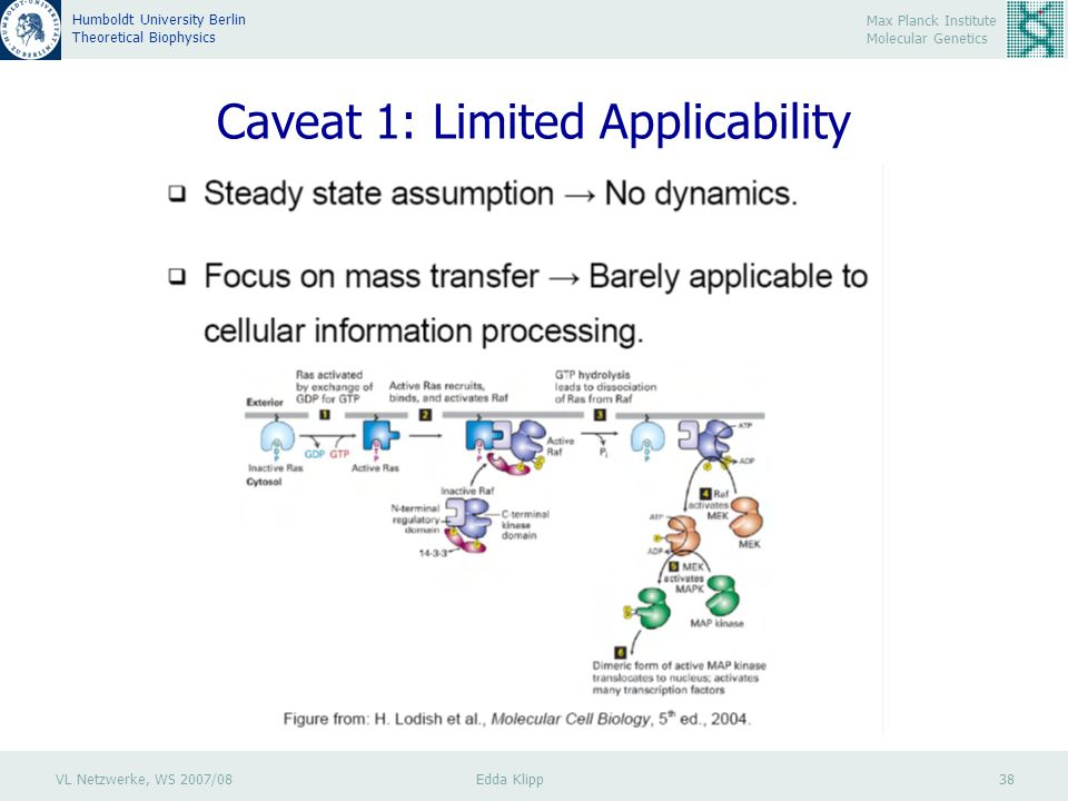 VL Netzwerke, WS 2007/08 Edda Klipp 38 Max Planck Institute Molecular Genetics Humboldt University Berlin Theoretical Biophysics Caveat 1: Limited App