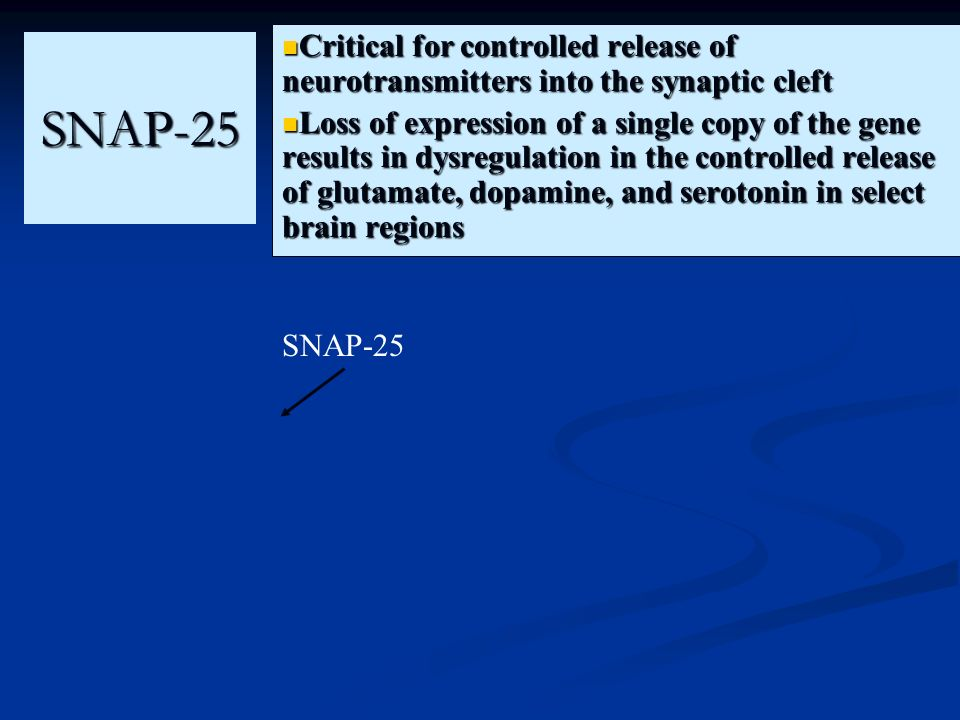 SNAP-25 Critical for controlled release of neurotransmitters into the synaptic cleft Loss of expression of a single copy of the gene results in dysreg