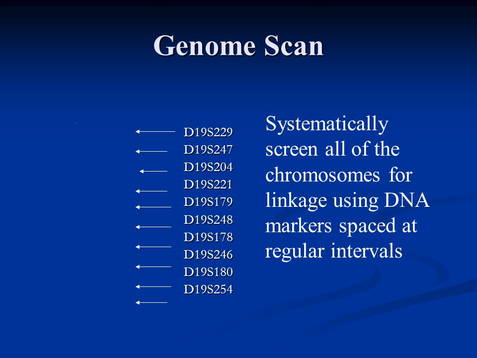 D19S229D19S247D19S204D19S221D19S179D19S248D19S178D19S246D19S180D19S254 Genome Scan Systematically screen all of the chromosomes for linkage using DNA