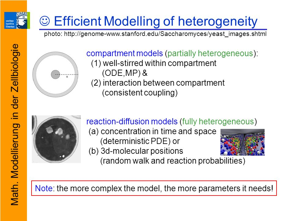 Math. Modellierung in der Zellbiologie Efficient Modelling of heterogeneity compartment models (partially heterogeneous): (1) well-stirred within comp