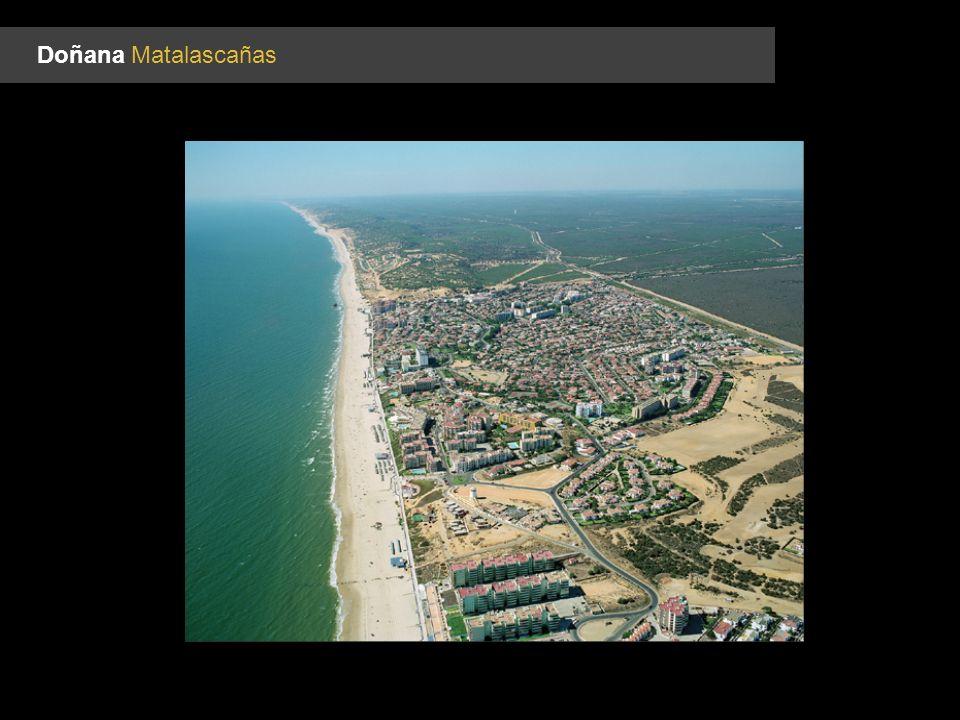 Doñana Matalascañas