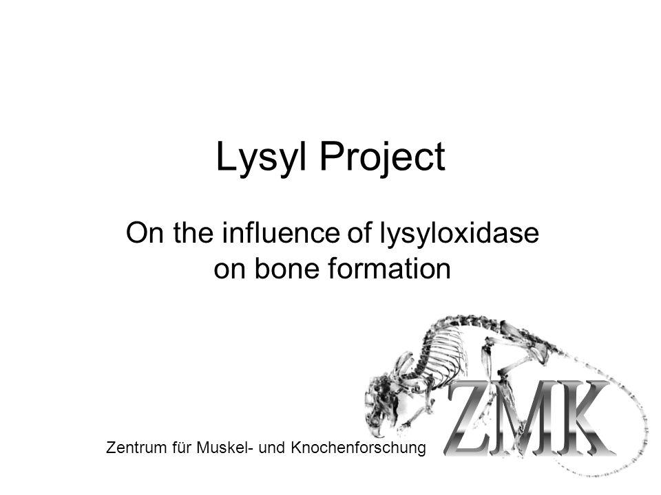 Lysyl Project On the influence of lysyloxidase on bone formation Zentrum für Muskel- und Knochenforschung