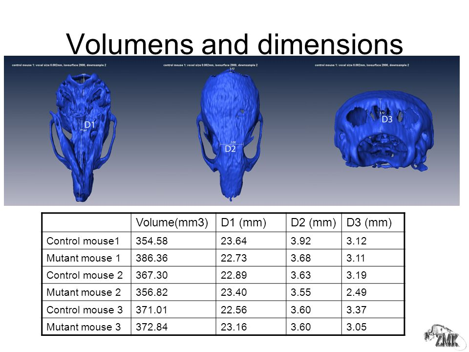 Volumens and dimensions Volume(mm3)D1 (mm)D2 (mm)D3 (mm) Control mouse1354.5823.643.923.12 Mutant mouse 1386.3622.733.683.11 Control mouse 2367.3022.893.633.19 Mutant mouse 2356.8223.403.552.49 Control mouse 3371.0122.563.603.37 Mutant mouse 3372.8423.163.603.05