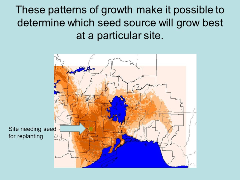 These patterns of growth make it possible to determine which seed source will grow best at a particular site.
