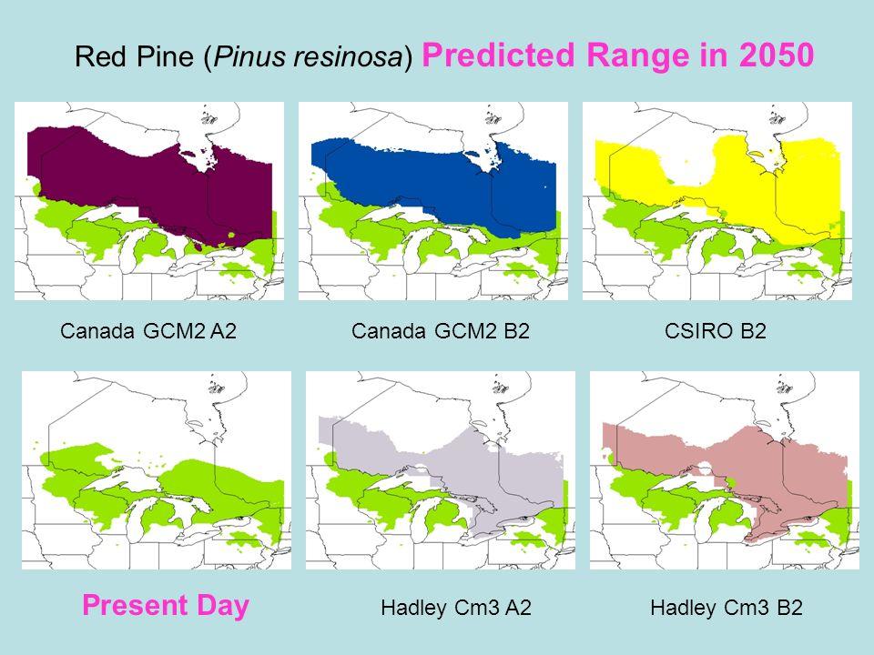 Red Pine (Pinus resinosa) Predicted Range in 2050 Present Day Hadley Cm3 A2Hadley Cm3 B2 Canada GCM2 A2Canada GCM2 B2CSIRO B2