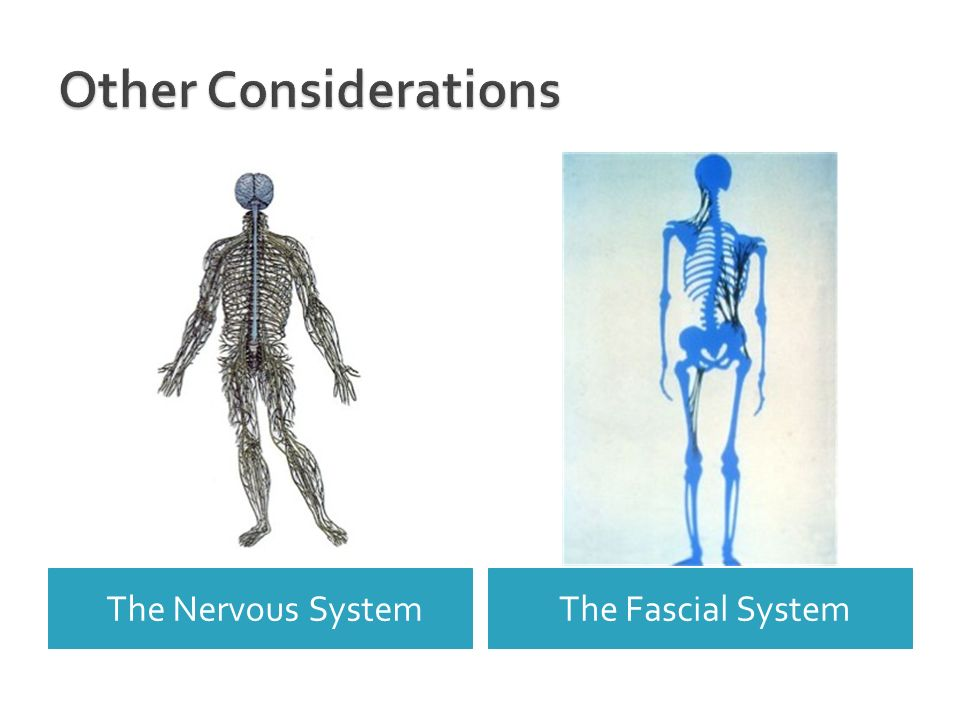 The Nervous SystemThe Fascial System