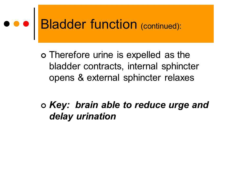 Bladder function (continued): Therefore urine is expelled as the bladder contracts, internal sphincter opens & external sphincter relaxes Key: brain a