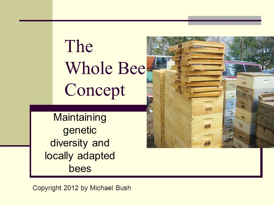 The Whole Bee Concept Maintaining genetic diversity and locally adapted bees Copyright 2012 by Michael Bush