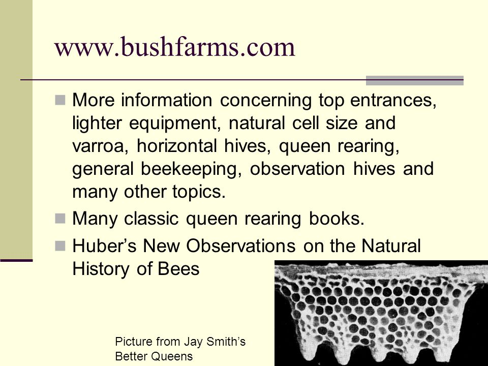 www.bushfarms.com More information concerning top entrances, lighter equipment, natural cell size and varroa, horizontal hives, queen rearing, general beekeeping, observation hives and many other topics.
