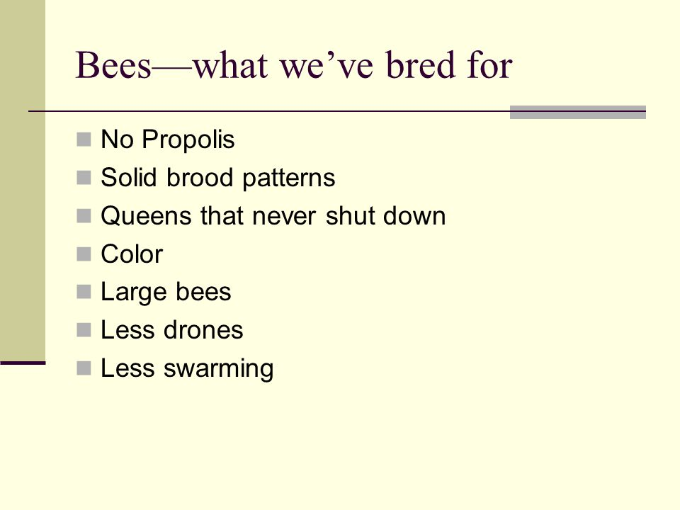 Counter Productive We have bred bees that are not as healthy because propolis is part of their immune system We have bred bees that are reproductively challenged because of less drones, bigger drones, less swarming etc.