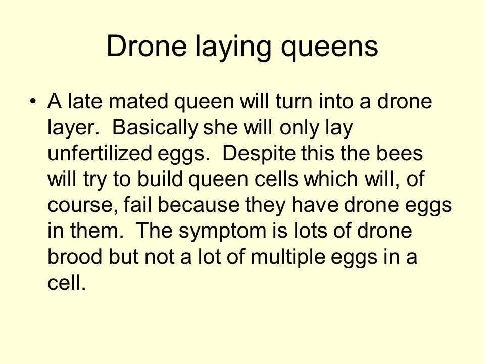 Drone laying queens A late mated queen will turn into a drone layer. Basically she will only lay unfertilized eggs. Despite this the bees will try to