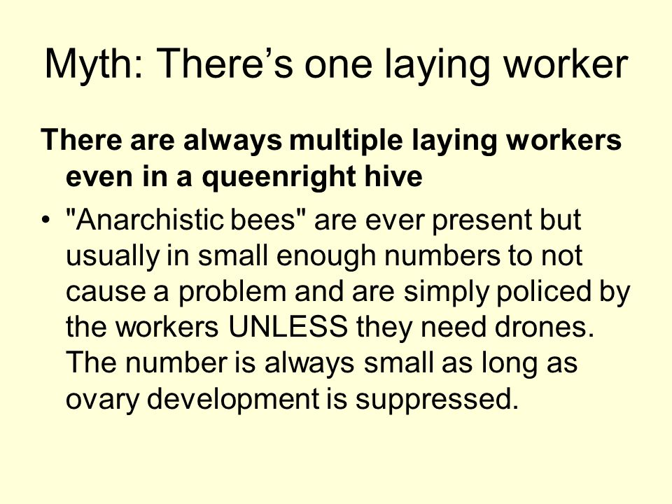 Myth: Theres one laying worker There are always multiple laying workers even in a queenright hive