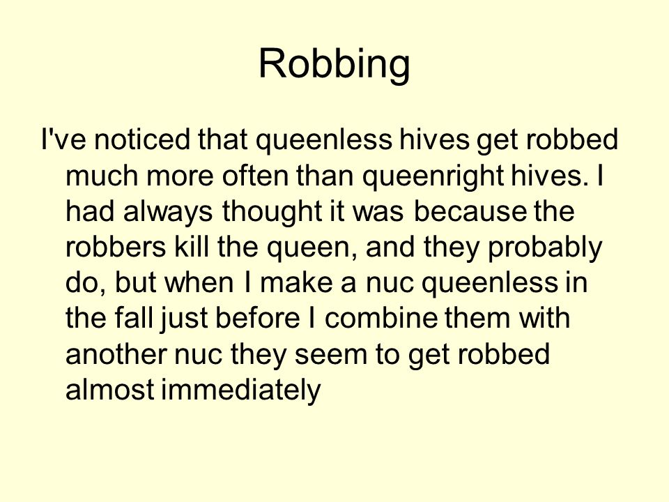 Robbing I've noticed that queenless hives get robbed much more often than queenright hives. I had always thought it was because the robbers kill the q