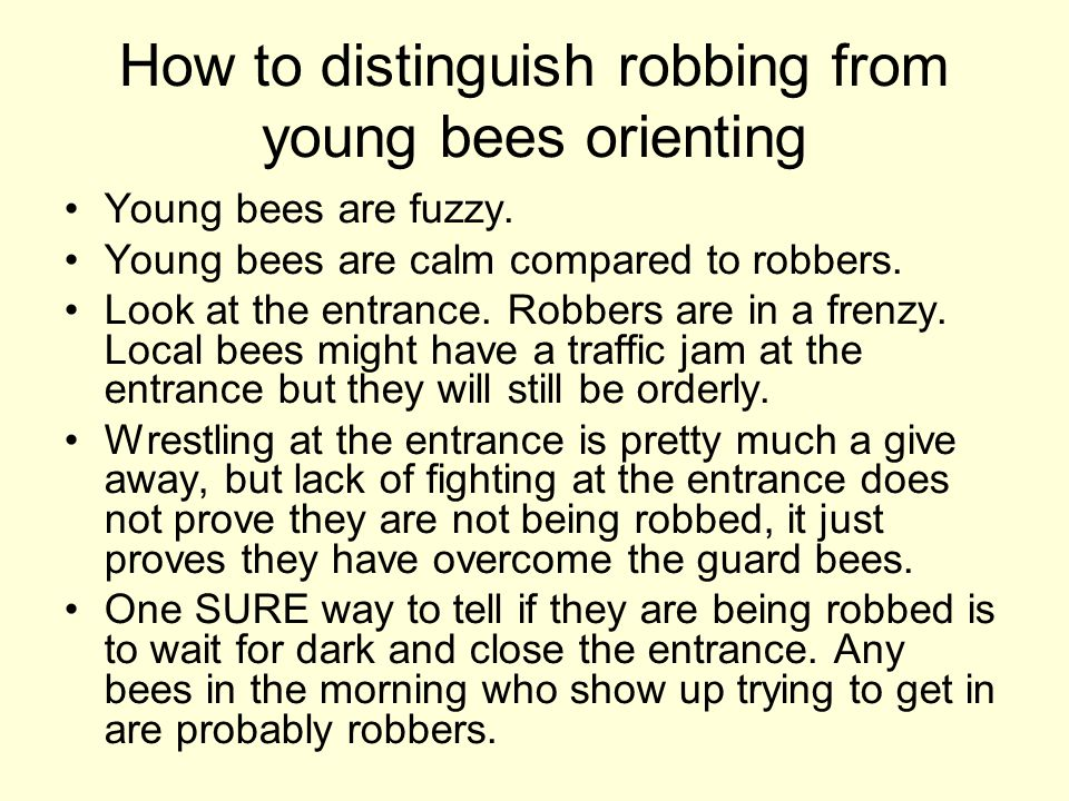 How to distinguish robbing from young bees orienting Young bees are fuzzy. Young bees are calm compared to robbers. Look at the entrance. Robbers are