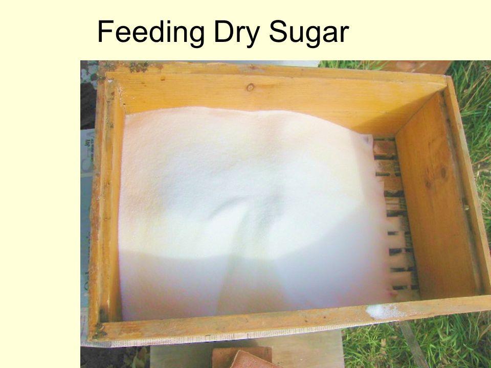 Feeding Dry Sugar