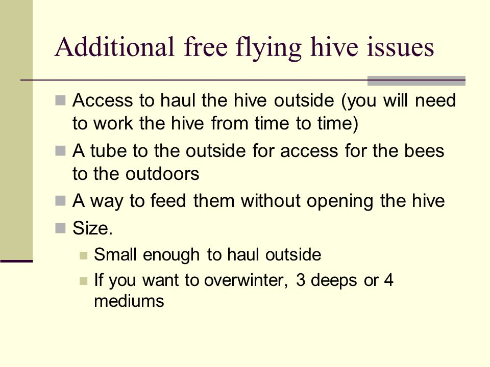 Additional free flying hive issues Access to haul the hive outside (you will need to work the hive from time to time) A tube to the outside for access for the bees to the outdoors A way to feed them without opening the hive Size.