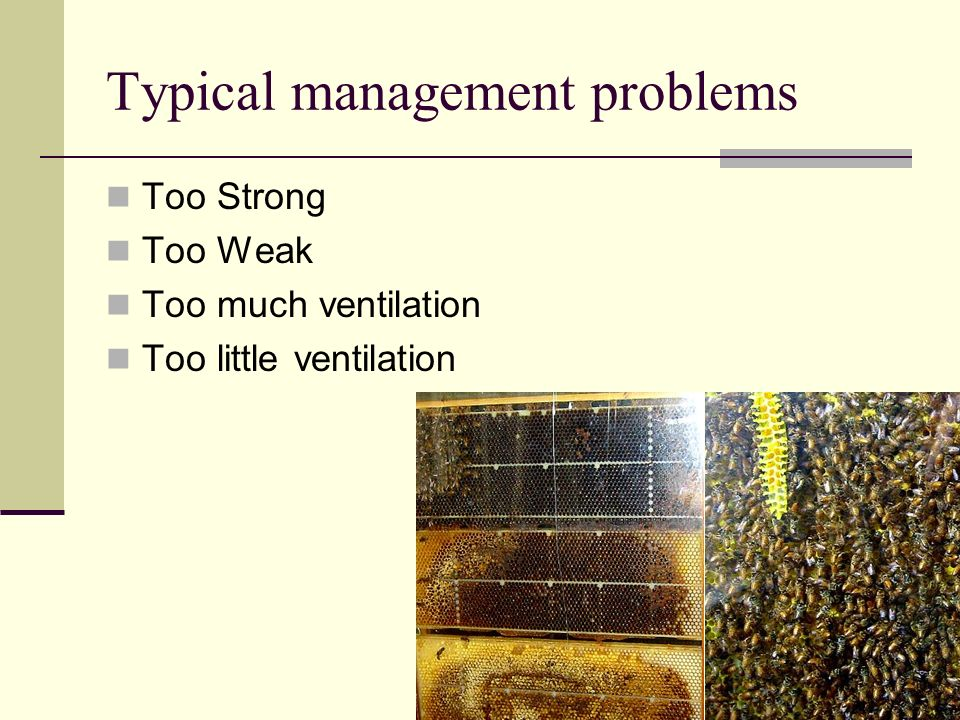 Typical management problems Too Strong Too Weak Too much ventilation Too little ventilation