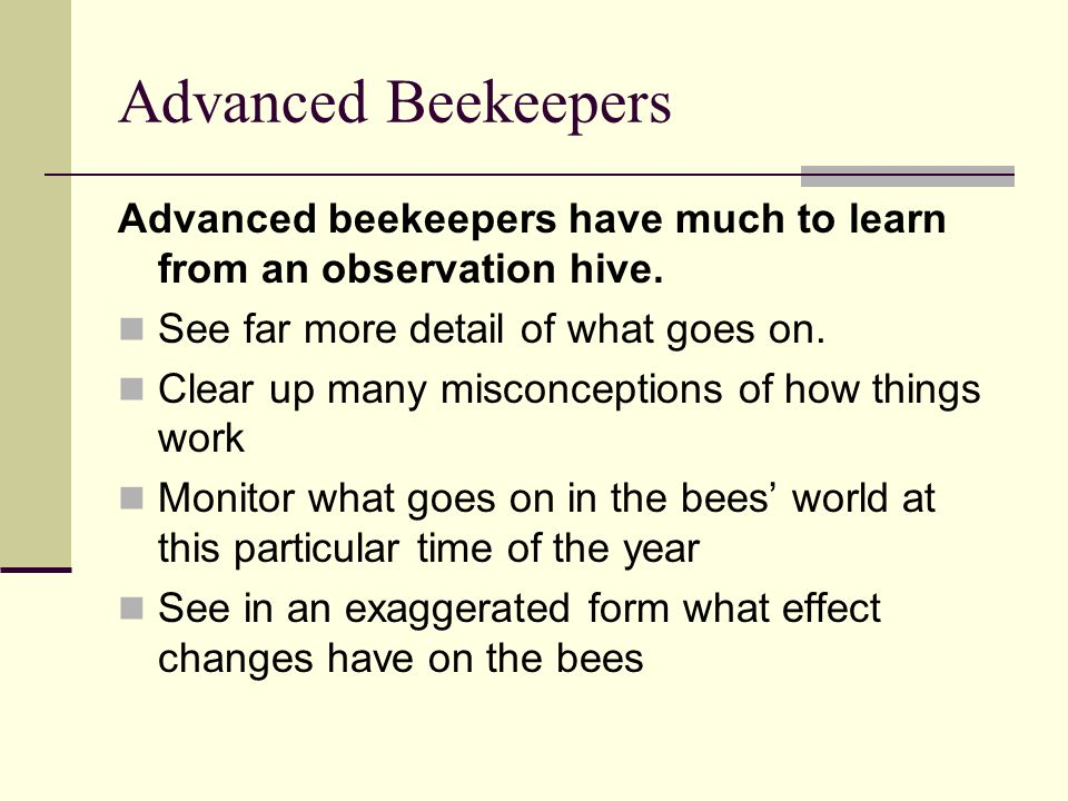 Advanced Beekeepers Advanced beekeepers have much to learn from an observation hive. See far more detail of what goes on. Clear up many misconceptions