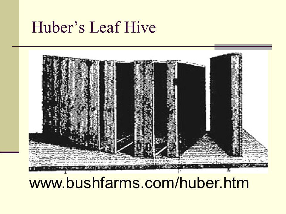 www.bushfarms.com/huber.htm
