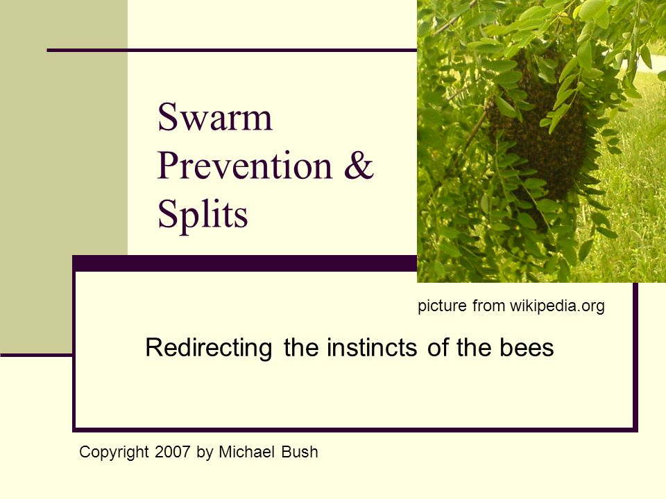 Swarm Prevention & Splits Redirecting the instincts of the bees Copyright 2007 by Michael Bush picture from wikipedia.org