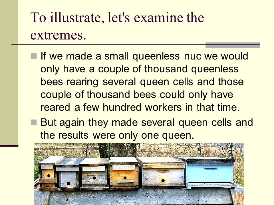 To illustrate, let's examine the extremes. If we made a small queenless nuc we would only have a couple of thousand queenless bees rearing several que