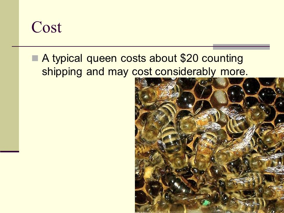 Cost A typical queen costs about $20 counting shipping and may cost considerably more.