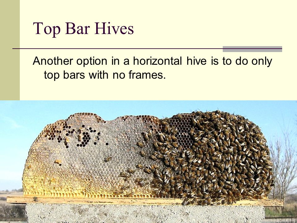 Why a Top Bar Hive.