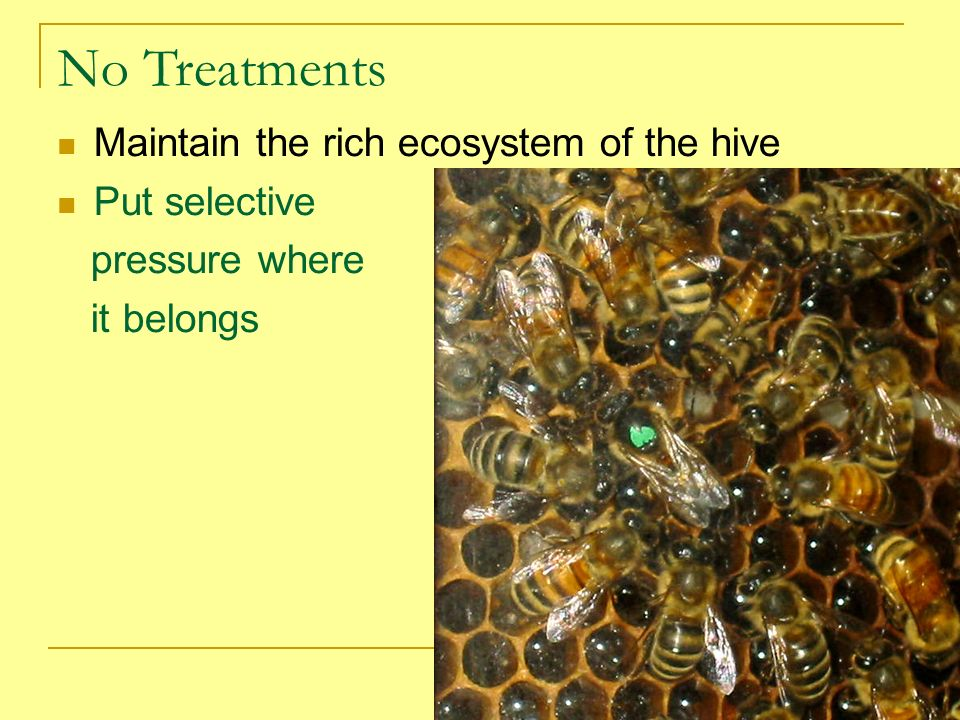 No Treatments Maintain the rich ecosystem of the hive Put selective pressure where it belongs