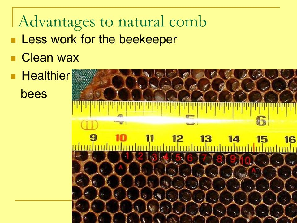 Advantages to natural comb Less work for the beekeeper Clean wax Healthier bees