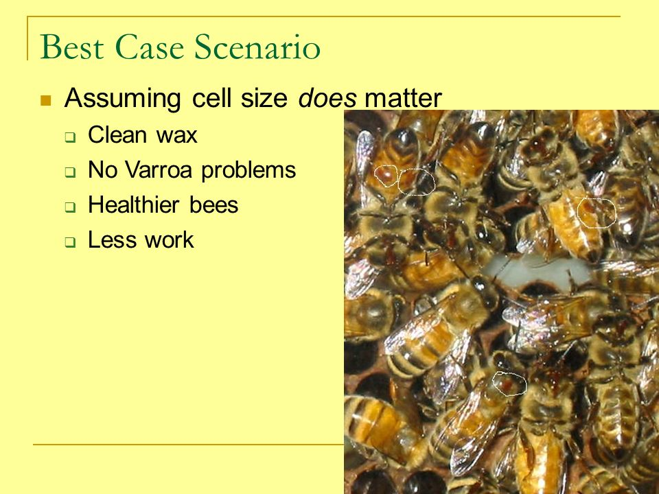 Best Case Scenario Assuming cell size does matter Clean wax No Varroa problems Healthier bees Less work