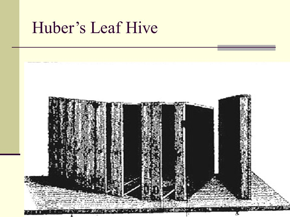 Hubers Leaf Hive