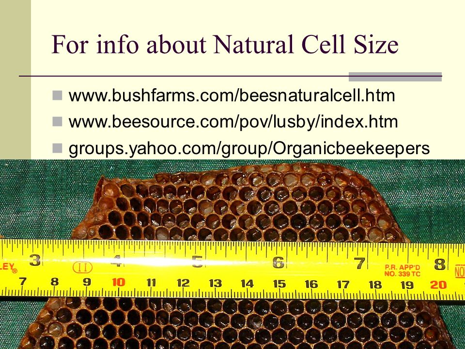 For info about Natural Cell Size www.bushfarms.com/beesnaturalcell.htm www.beesource.com/pov/lusby/index.htm groups.yahoo.com/group/Organicbeekeepers
