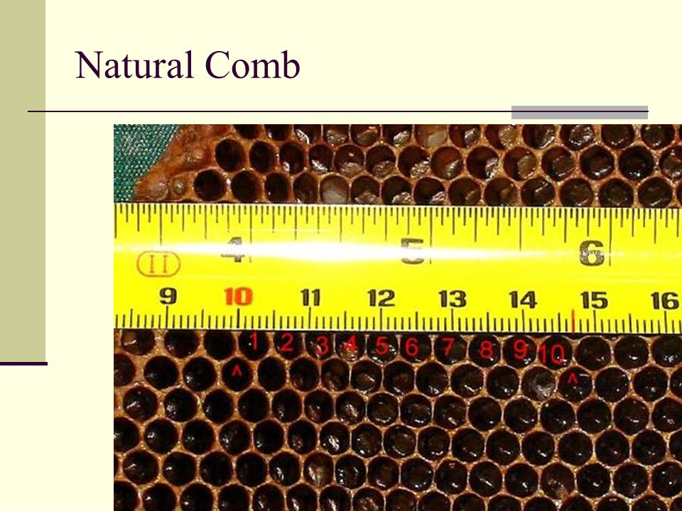 Current cell sizes Cell sizes of natural comb and common foundation Natural worker comb 4.4 mm to 5.1mm Lusby 4.8 to 4.9 mm average 4.83 mm Dadant 4.9mm Small Cell 4.9 mm Honey Super Cell 4.9 mm Wax dipped PermaComb 4.95 mm Mann Lake PF100 & PF120 4.95 mm 19th century foundation 5.0 to 5.08 mm Dadant 5.1mm Small Cell 5.1 mm PermaComb 5.1 mm Pierco foundation 5.2 mm Pierco deep frames 5.25 mm Pierco medium frames 5.35 mm RiteCell 5.4 mm Standard worker foundation 5.4 to 5.5mm 7/11 5.6 mm HSC Medium Frames 6.0 mm Drone 6.4 to 6.6 mm