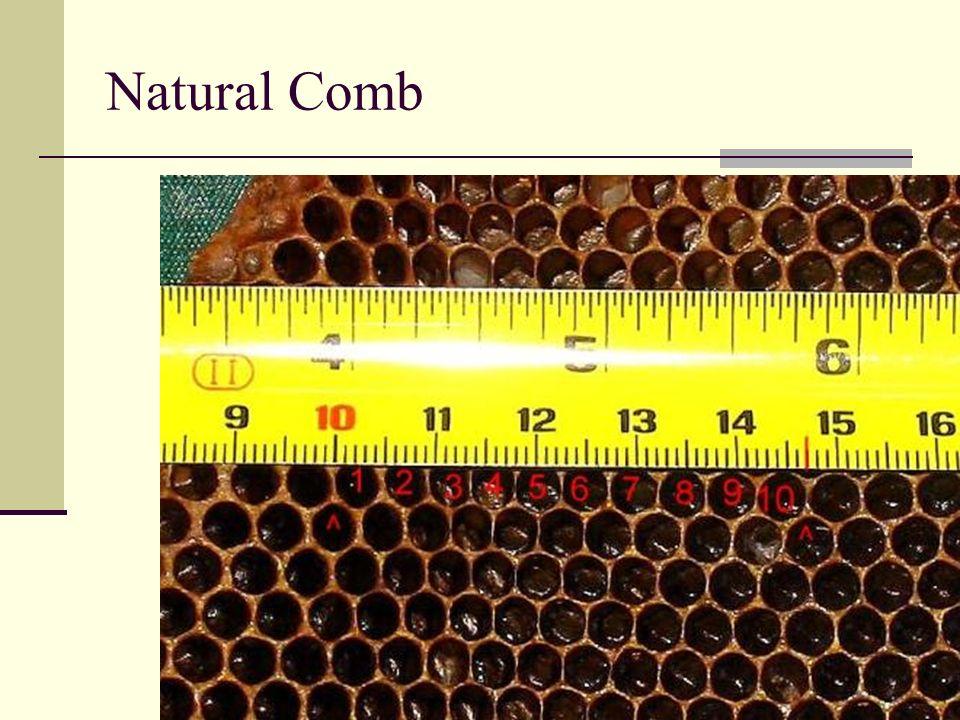 Natural Comb