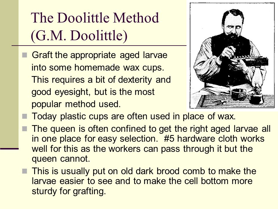 The Doolittle Method (G.M. Doolittle) Graft the appropriate aged larvae into some homemade wax cups. This requires a bit of dexterity and good eyesigh