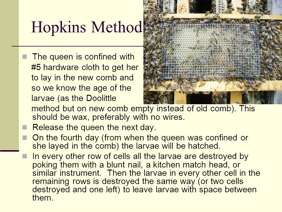 Hopkins Method The queen is confined with #5 hardware cloth to get her to lay in the new comb and so we know the age of the larvae (as the Doolittle m
