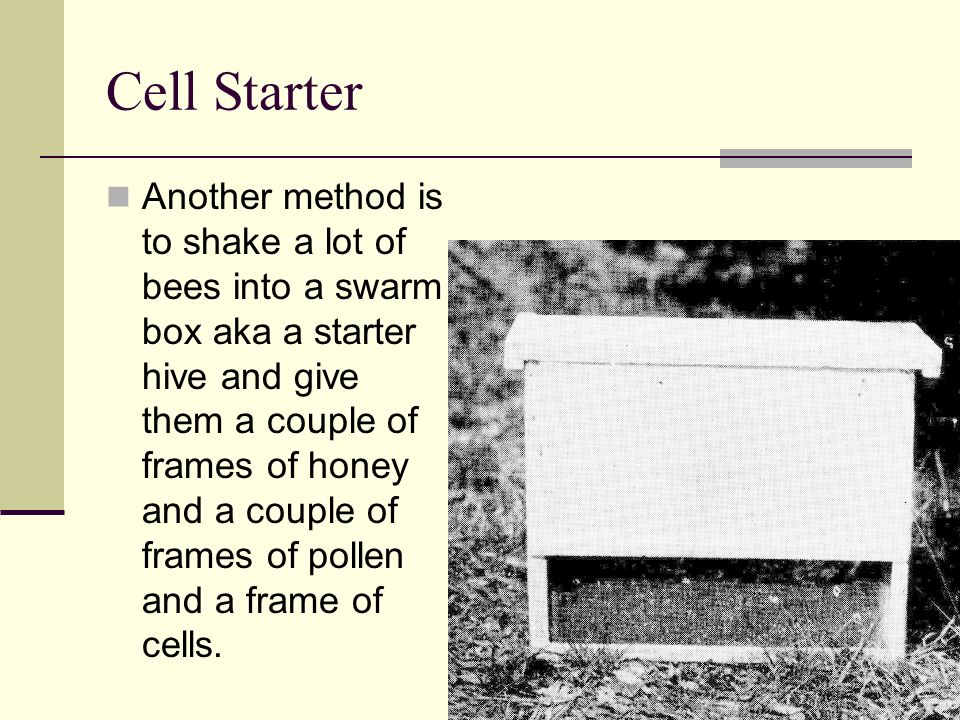 Cell Starter Another method is to shake a lot of bees into a swarm box aka a starter hive and give them a couple of frames of honey and a couple of fr