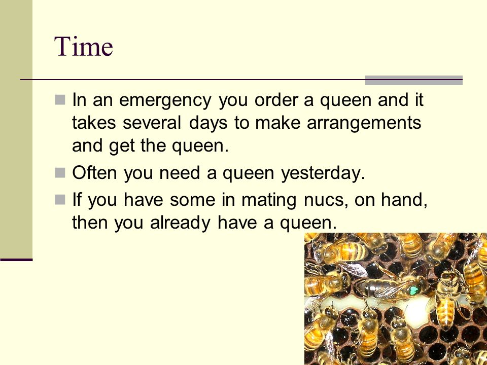 Time In an emergency you order a queen and it takes several days to make arrangements and get the queen. Often you need a queen yesterday. If you have