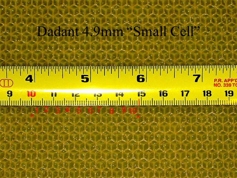 Dadant 4.9mm Small Cell