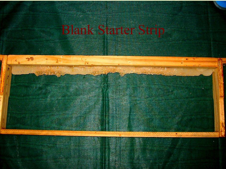 Blank Starter Strip