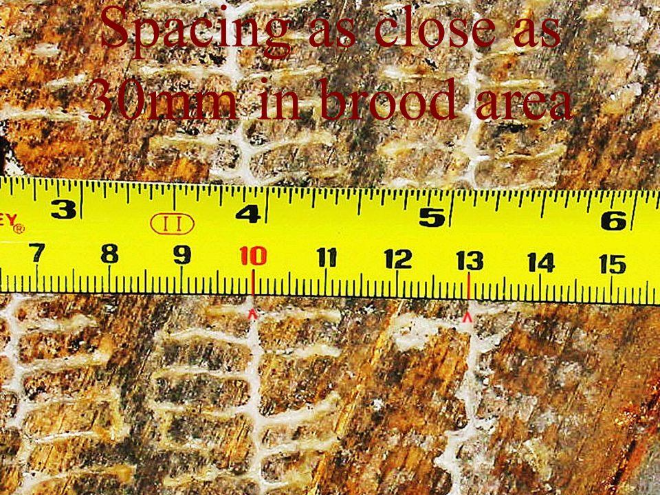 Spacing as close as 30mm in brood area