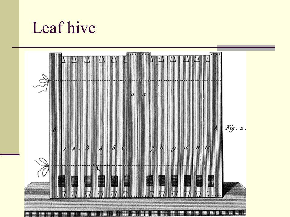 Leaf hive