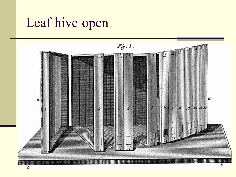 Leaf hive open