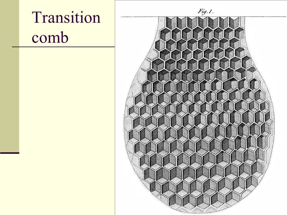 Transition comb