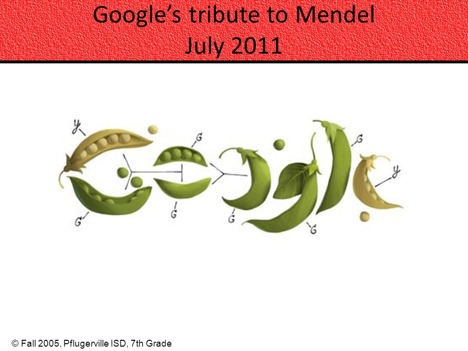 © Fall 2005, Pflugerville ISD, 7th Grade Googles tribute to Mendel July 2011
